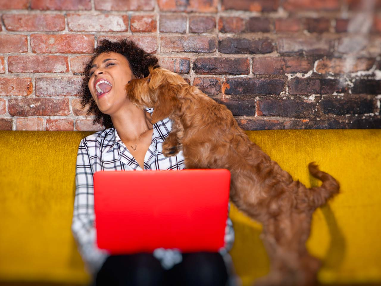 Woman on her laptop while pet dog licks her face